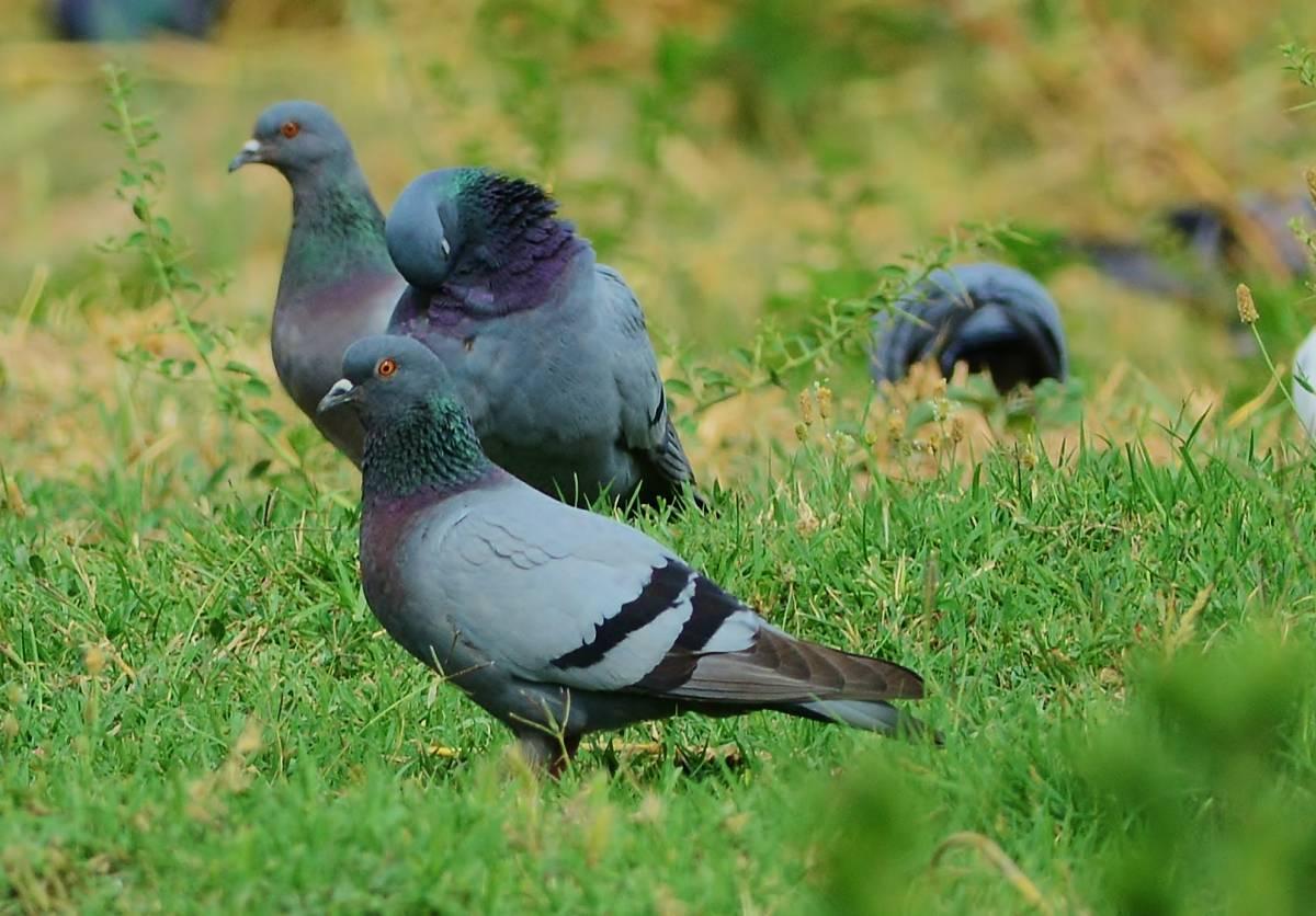 фотографии картинки про сизых голубей косметологи соединили